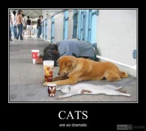 AWWW!  THAT WAS GOOD!   CATS ARE SO DRAMATIC