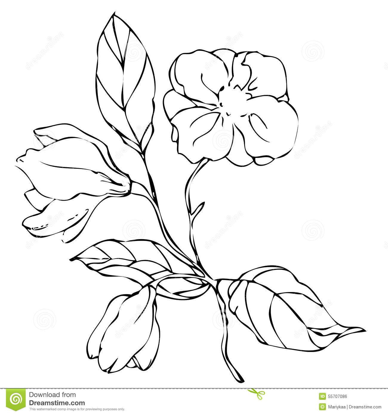 dibujos de flores de enredadera - Buscar con Google