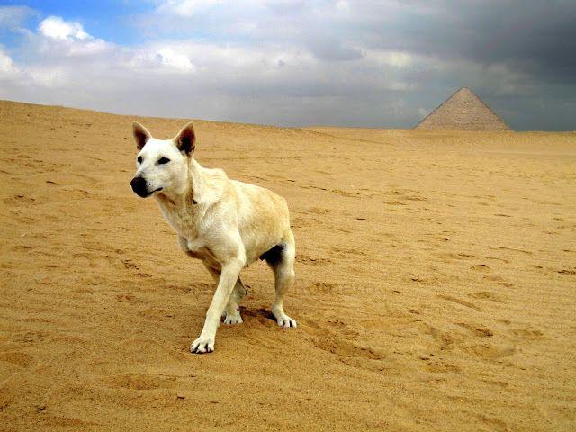 Hay quien lo llama fotografía: En el desierto
