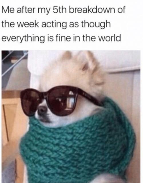 Everythings Fine Meme : everythings, Everything, World, Meme,, Humor,, Laughs