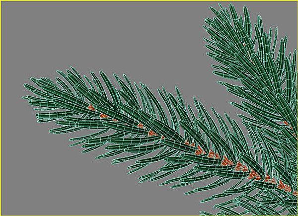 http www turbosquid com 3d models 3d model of branch fir 570515