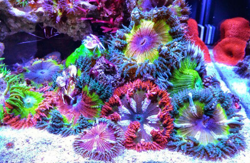 rock flower anemone garden
