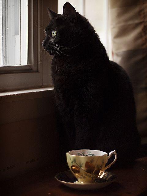 Cat If De Tea Wuz Replaced Wif Cream