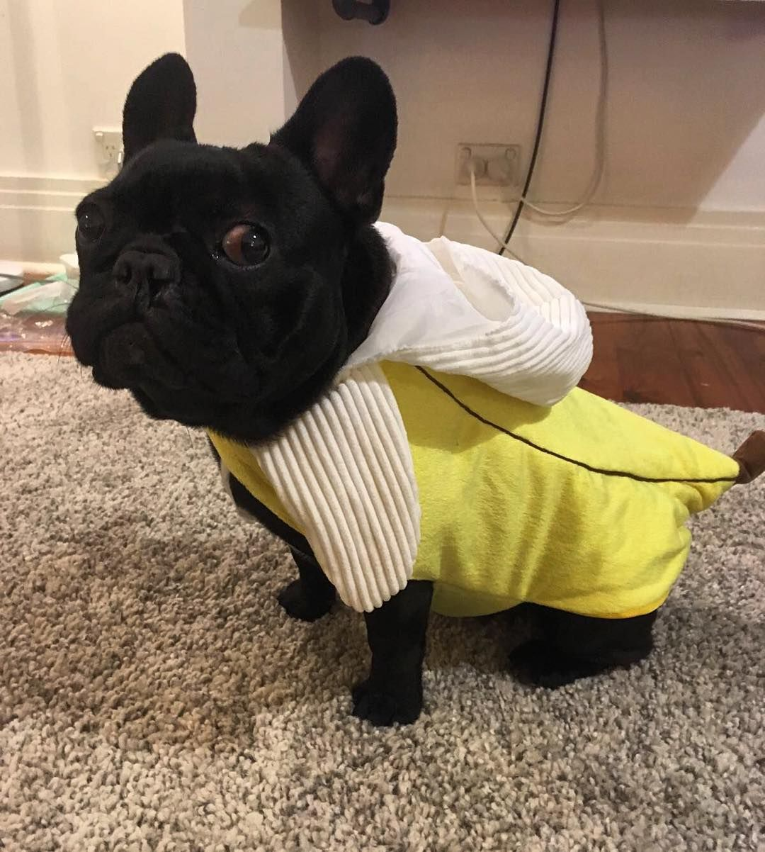 When You Re Feeling Awkward In Your Halloween Costume Banana
