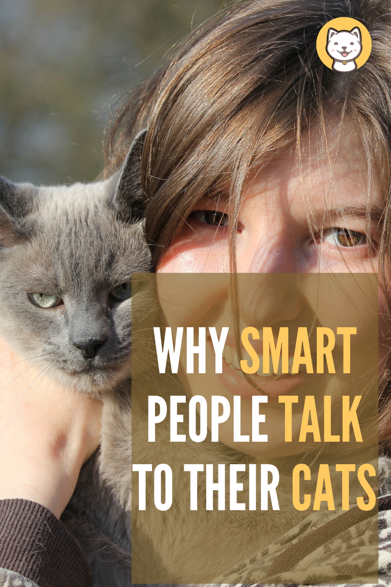 Why Smart People Talk to Their Cats and how to understand
