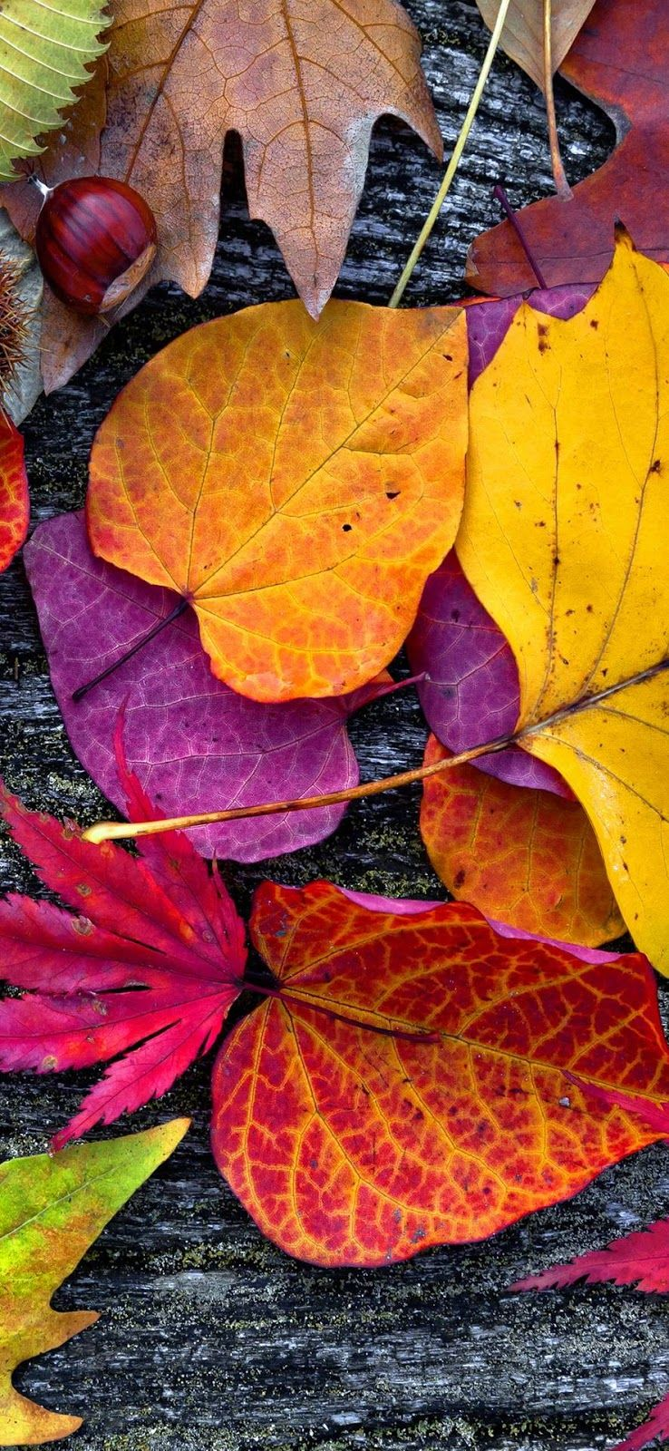 Nature Wallpaper Download Images Of Nature Beauty Nature Wallpaper Hd 3d Natural Photo Galle Iphone Wallpaper Fall Leaves Fall Wallpaper Nature Wallpaper
