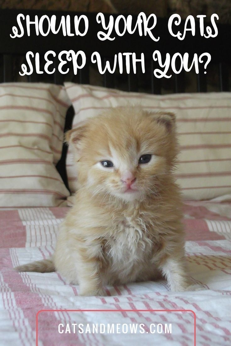 Should Your Cats Sleep With You Cat Sleeping Raising Kittens Sleeping Kitten