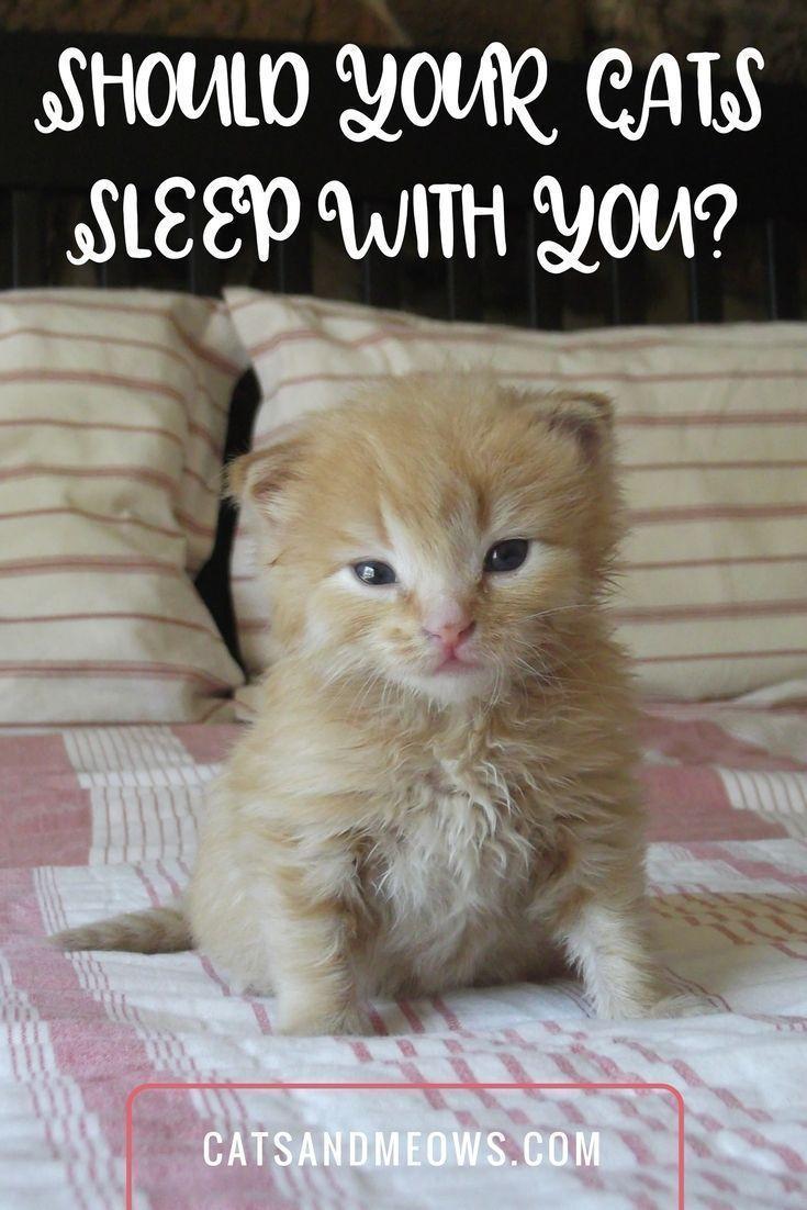 Should Your Cats Sleep With You Cat Sleeping Raising Kittens Sleeping Kitten