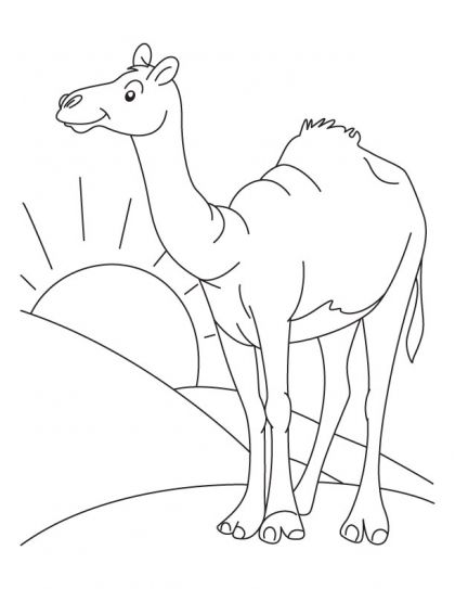 The lone arabian camel standing in the sahara desert coloring page