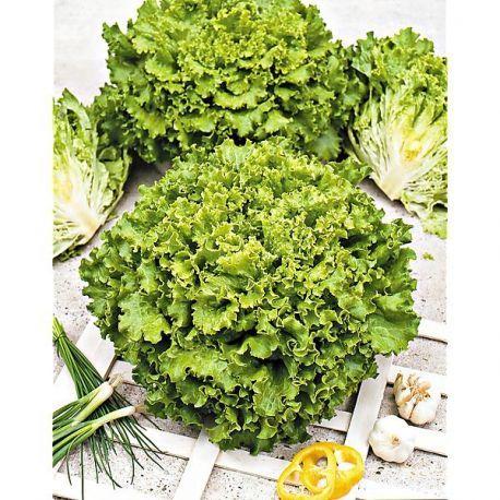 cadeau 1 plante surprise mon potager pinterest garden. Black Bedroom Furniture Sets. Home Design Ideas