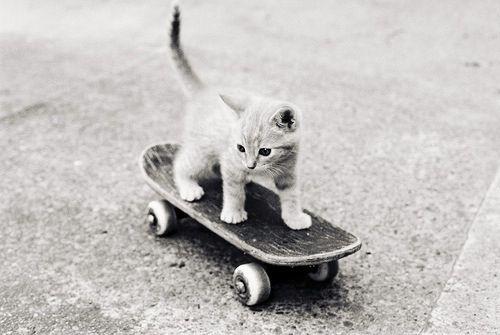 Kitten On A Skateboard Gatitos Adorables Gatos Gatitos Lindos