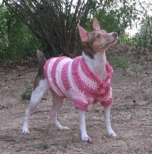 Free Crochet Dog Coat Pattern Dog In A Sweater Doggy Fashion Show