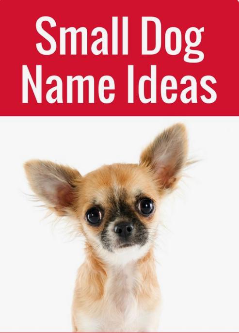 Adorable Small Dog Names Dog Names Small Dog Names Small Dogs