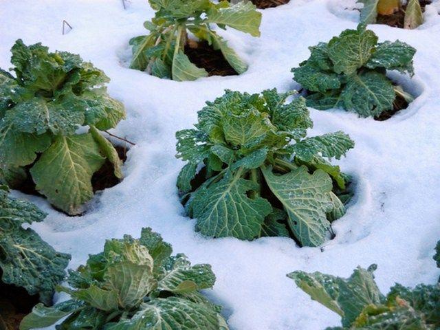 potager d hiver des l gumes productifs m me en hiver jardin pinterest blog jardin en. Black Bedroom Furniture Sets. Home Design Ideas