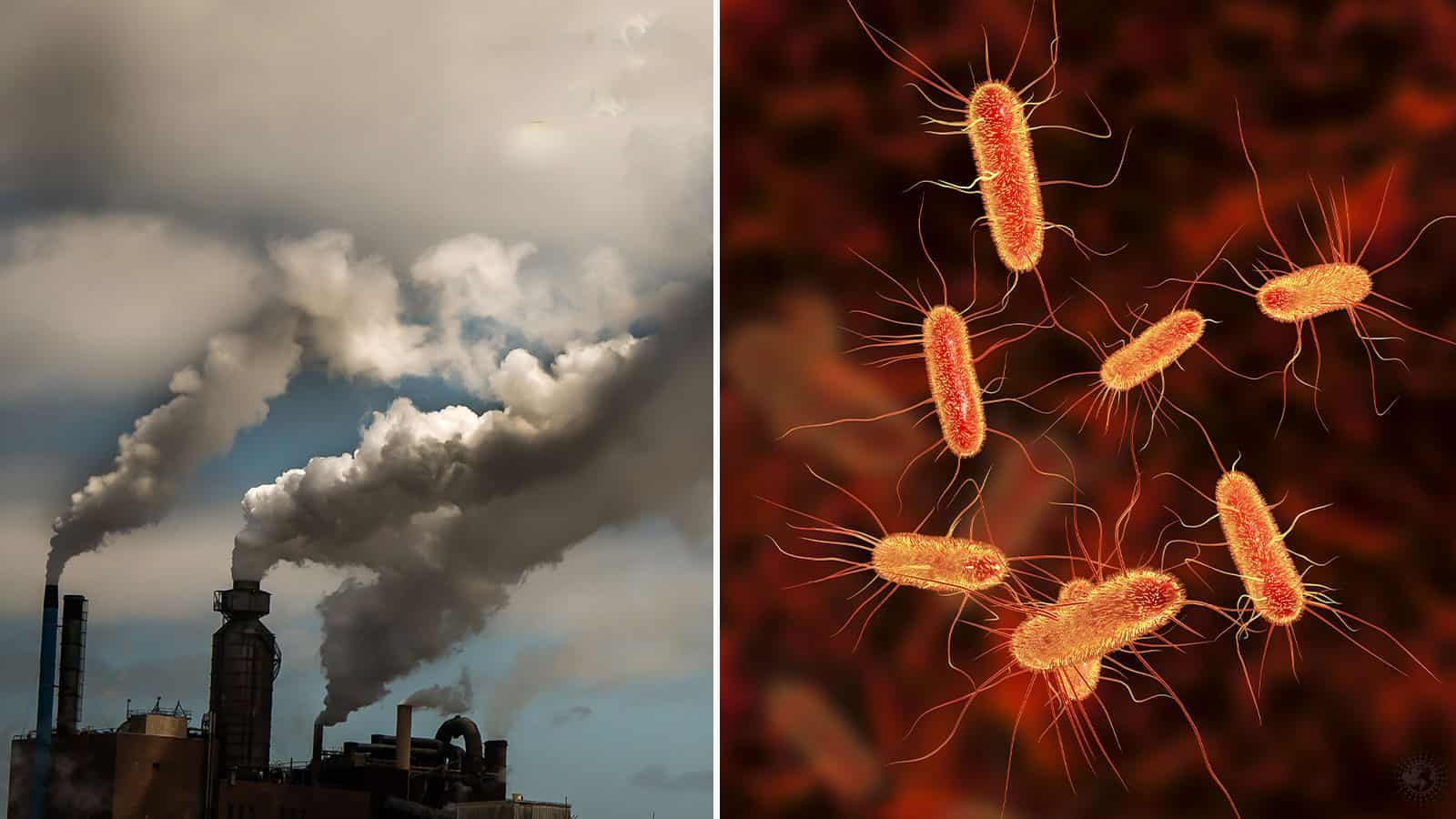 Israeli Researchers Reveal Bacteria That Eats Carbon Dioxide Co2