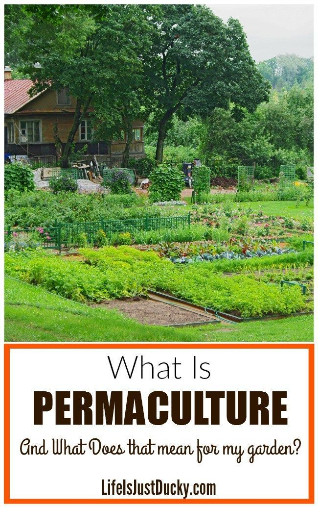 What Is Permaculture and is it right for your garden? Whether you
