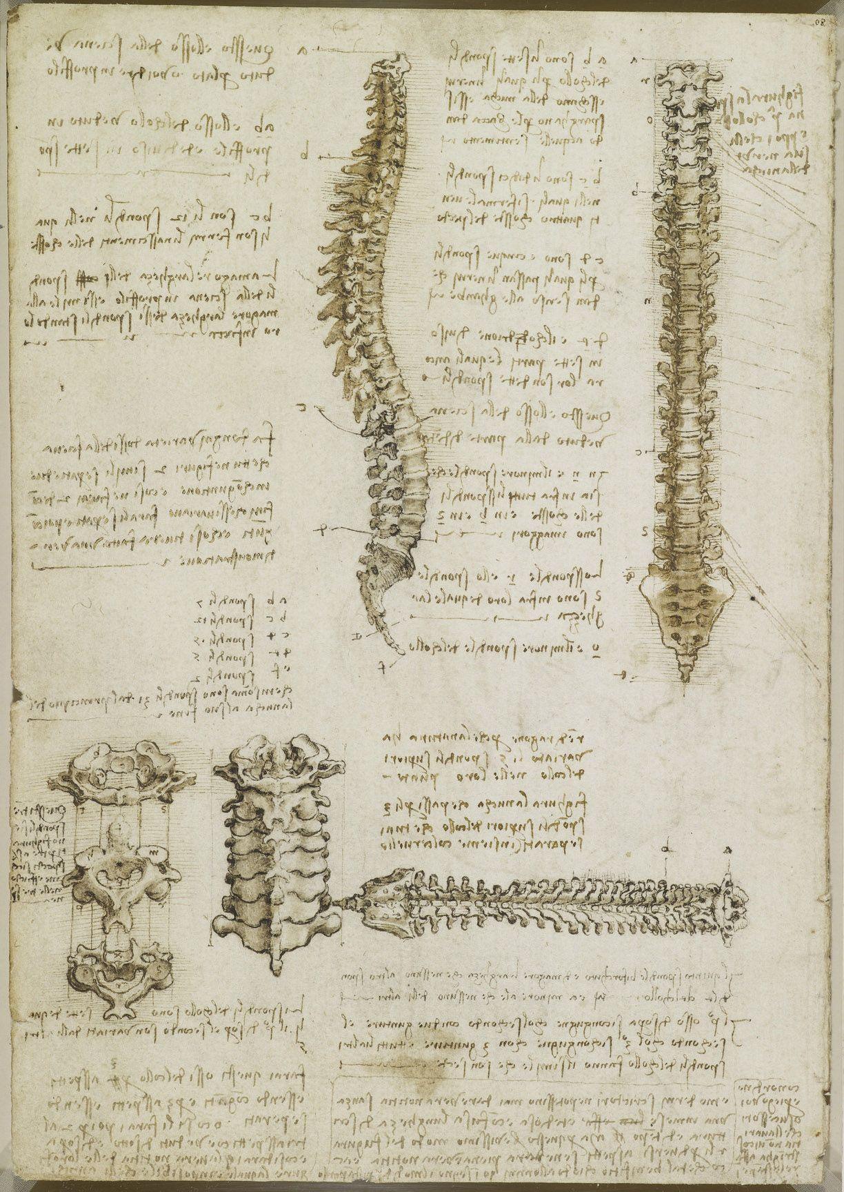 Leonardo da Vinci   Art/Nudes   Pinterest   Anatomy, Columns and ...