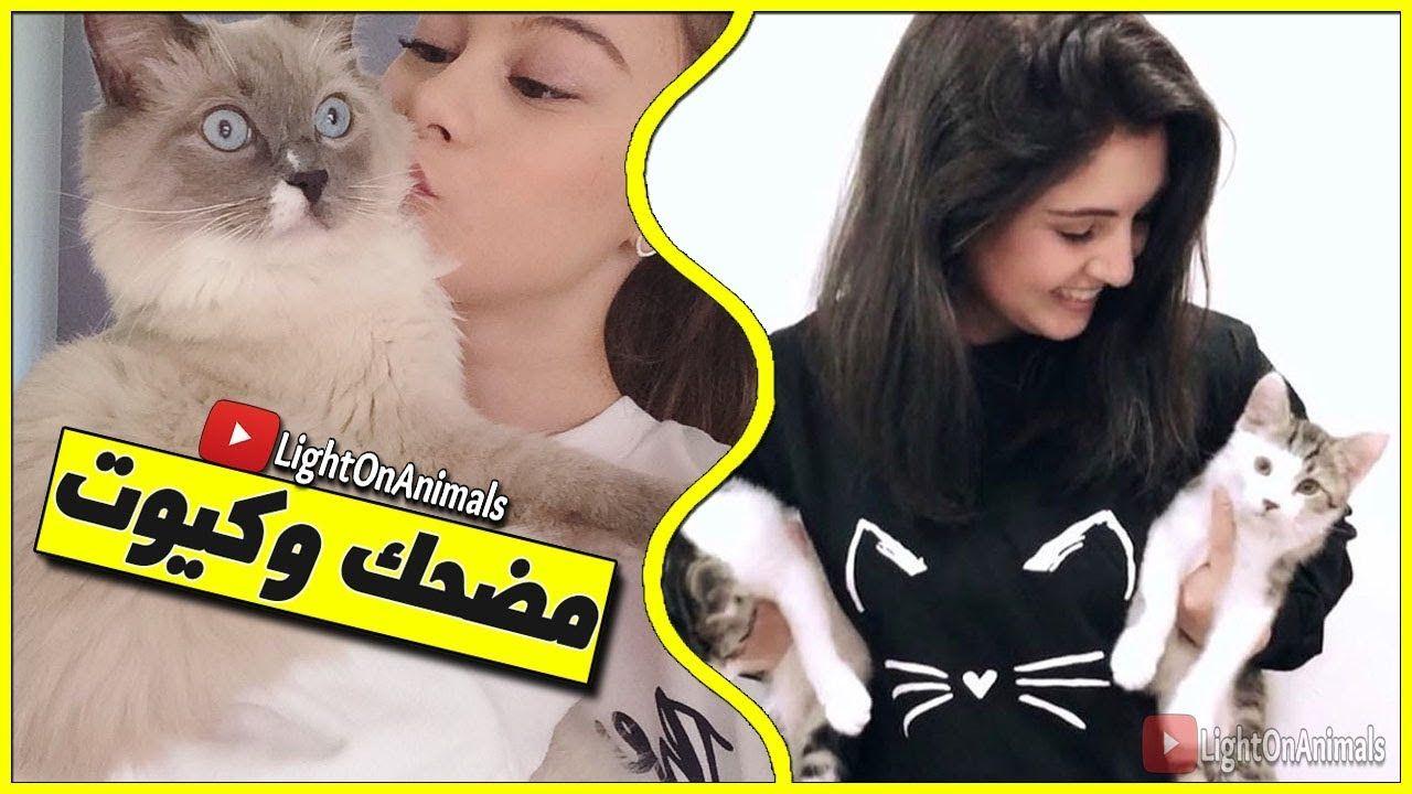 قطط مضحكة جدا تحدي الضحك مع القطط الصغيرة Cute Cats And Kittens Funny Cute Cats Cute Cats