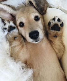 Cute Dogs, No Filler