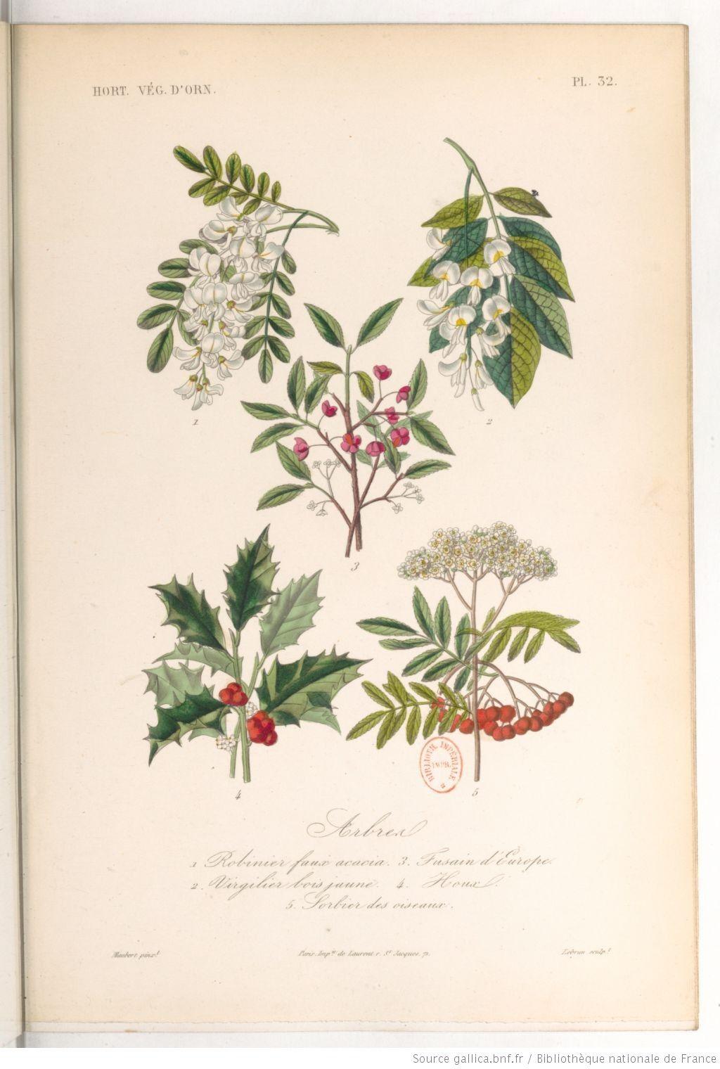 """""""Arbres"""", Le règne végétal, MM. A. Dupuis,... Fr. Gérard,... O. Réveil... [et al.]   1864-1869"""