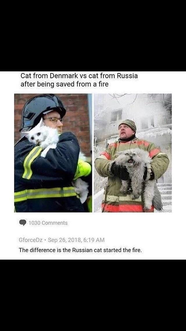 Nur in Russland #lustige #Memes   - Memes 'n Stuff - #lustige #Memes #nur #Russland #stuff #funnyanimalpictures