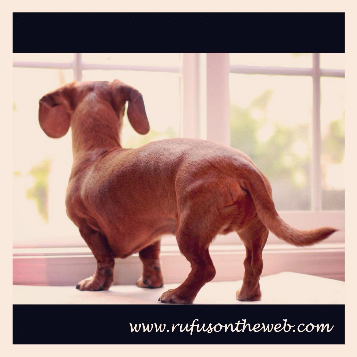 Creating awareness. http://wp.me/p27Fw1-dA #dachshund #doxies #lost dogs