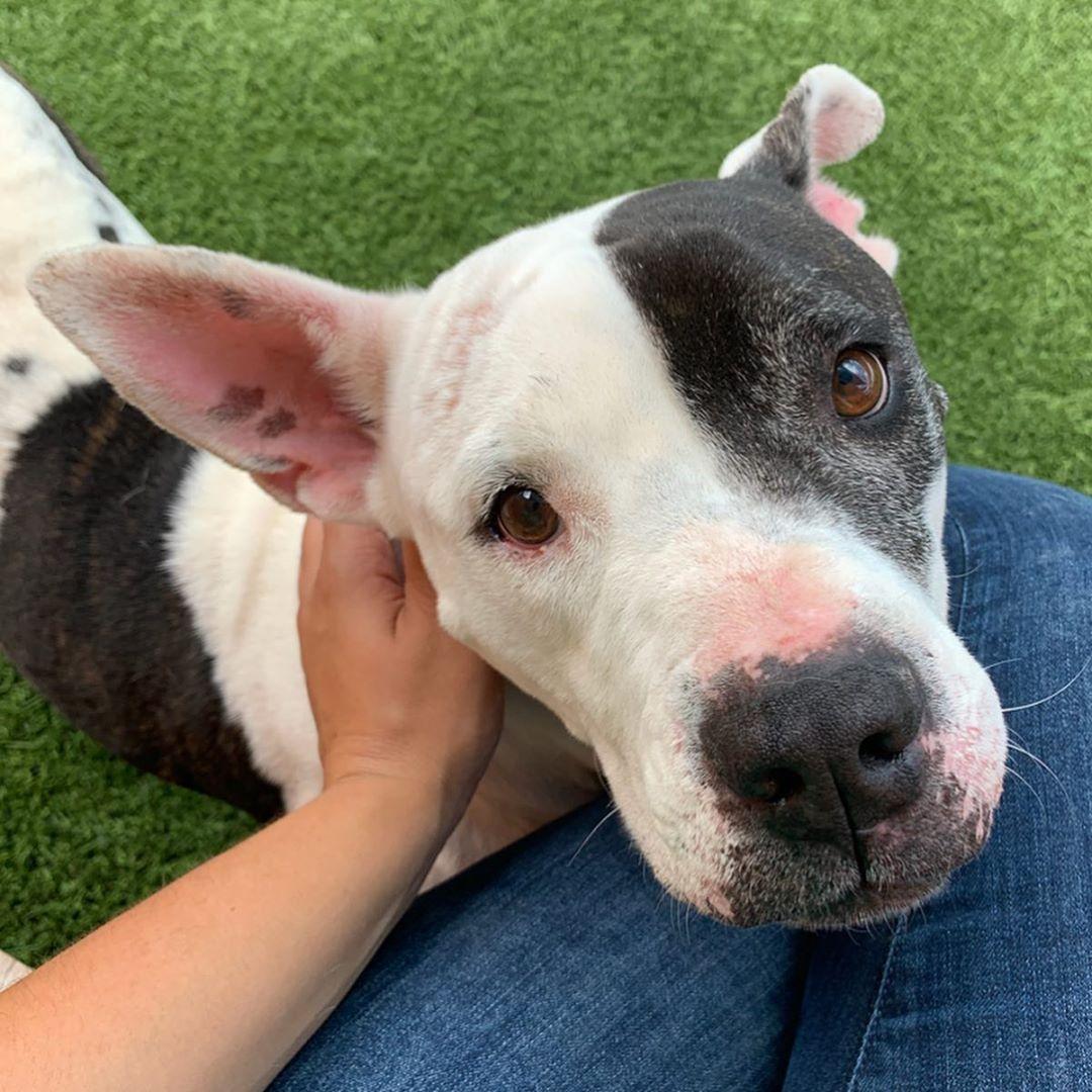Pets For Adoption Miami