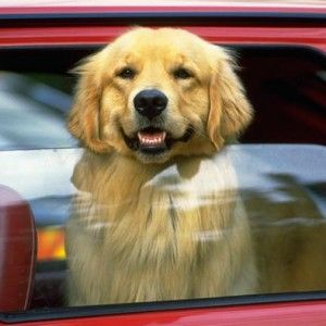 8 essential things to do when you see a dog left in a hot car fur dog 8 essential things to do when you see a dog left in a hot car publicscrutiny Gallery