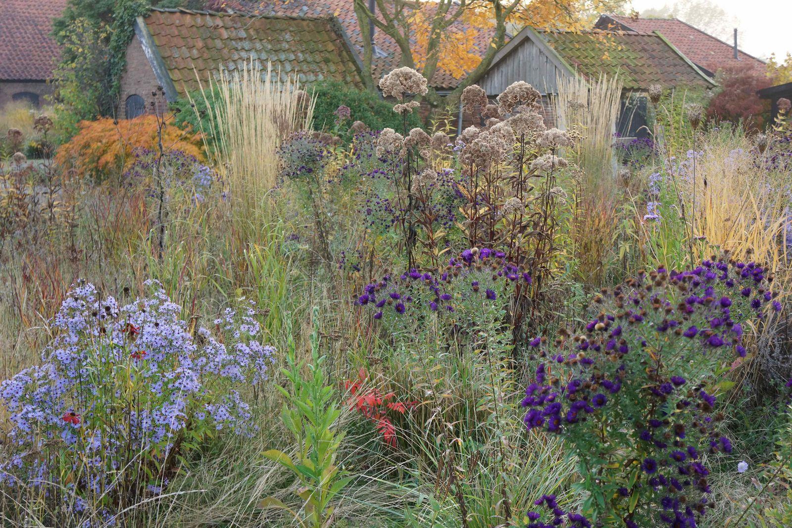 oudolf wild garden | Dutch gardens, Prairie garden, Garden ...