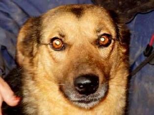 Bitte Spenden Sie Fur Die Ausreise Rumanischer Hunde In Unser Tierheim Hamburger Tierschutzverein Von 1841 E V Tierheim Tiere Hunde