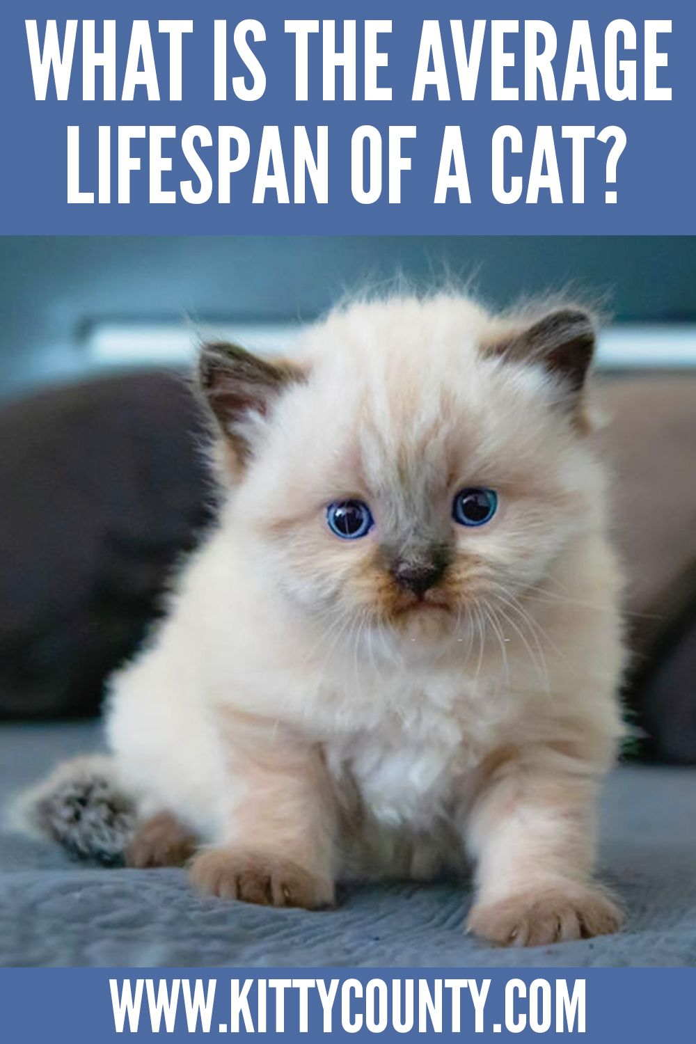 How Long Do Cats Live Your Conclusions Are Wrong Kitty County In 2020 Cat Facts Cats Cat Care