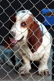 Dog Walkers Volunteer To Walk Dogs At Animal Shelters Animals Animal Rescue Animal Rescue Site
