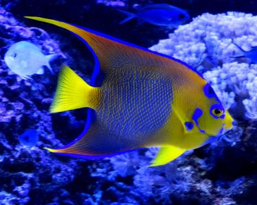 beautiful fish pictures - Google-Suche