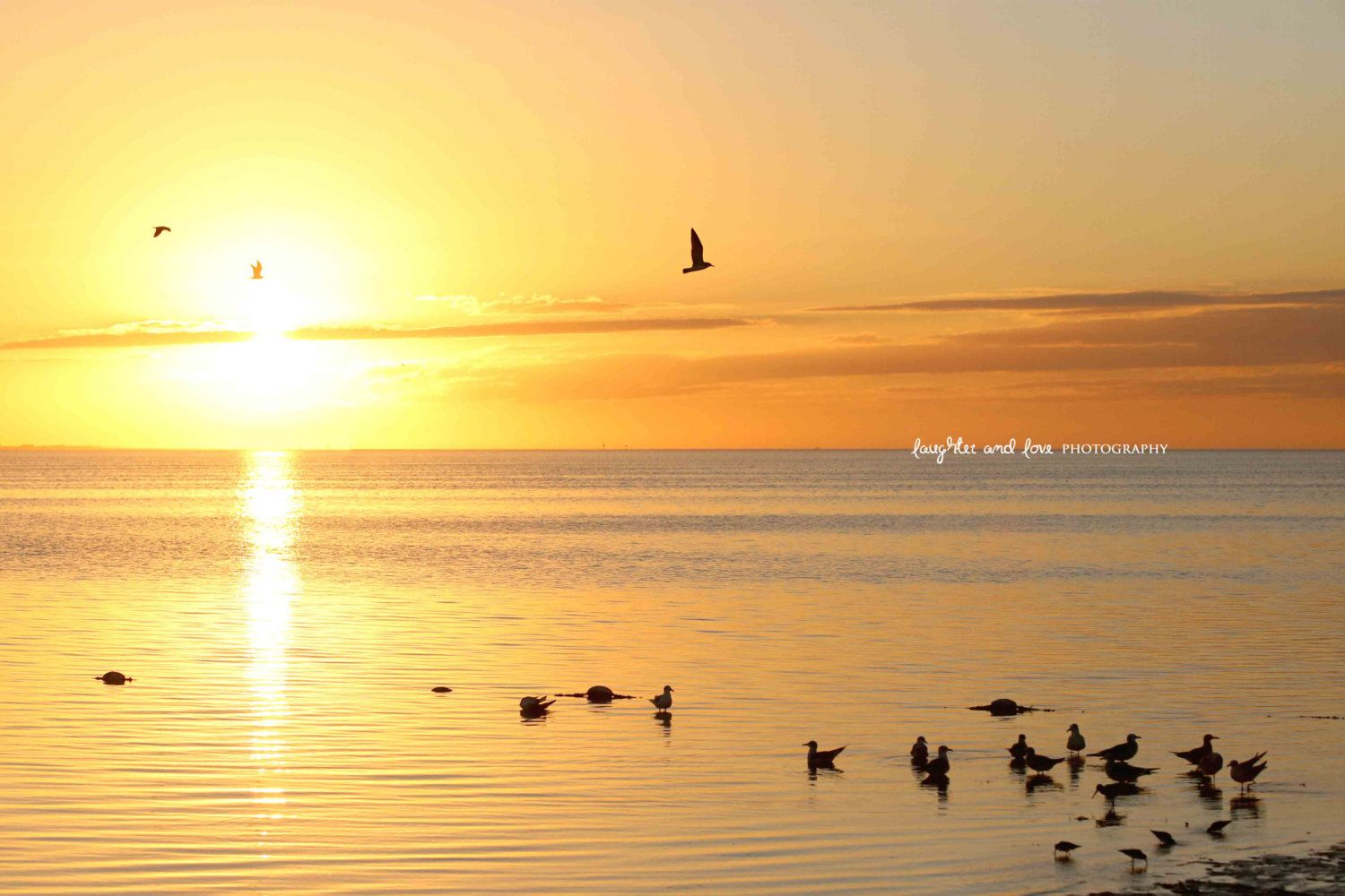 Soft Yellow Sunset Beach Photo, Ocean Seagulls Photography, Ocean ...