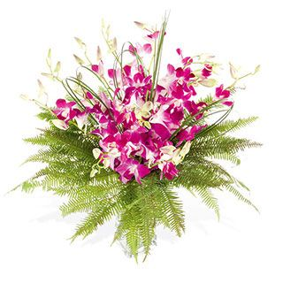 Singapore Orchid Arrangement Orchid Flower Arrangement Flowers Delivered In Uk The Harvest Orchid Flower Arrangements Orchid Arrangements Flowers Delivered