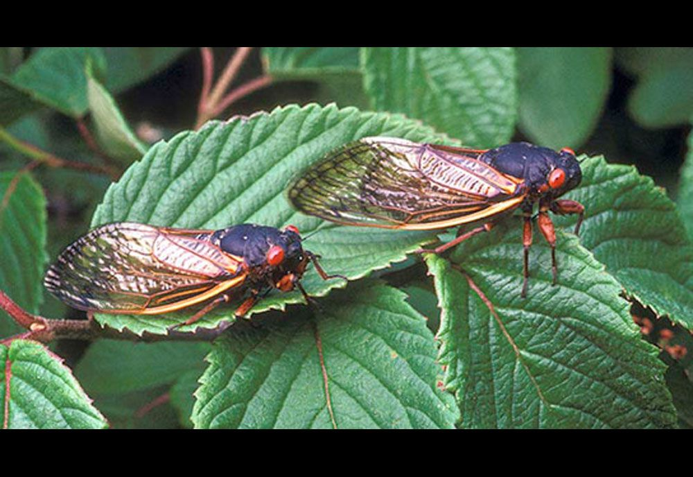 Insect Molting Process in Pictures in 2020 Periodical