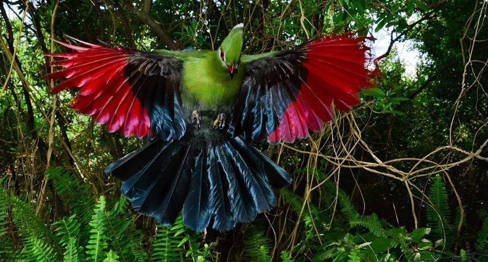 Pin by 楊逸鴻 on Turaco Fish pet, Birds, Animals