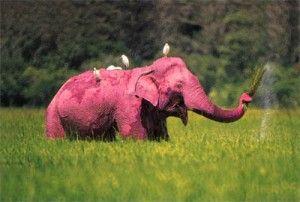 #pink elephant