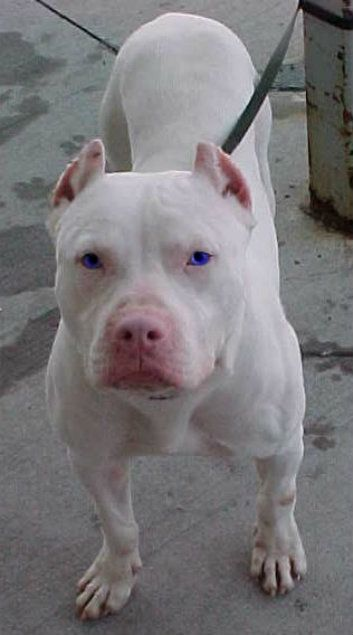 Albinos Animales Albinos Razas De Perros Animales Y Mascotas