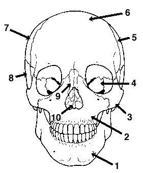 Anterior skull diagram quiz free download wiring diagrams skull 1 anterior view anatomy craze pinterest skull 1 anterior view at blank skull diagram inferior view ccuart Image collections