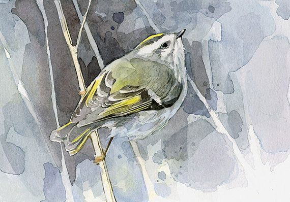 Bird Watercolor Print  Goldencrowned Kinglet by studiotuesday, $20.00