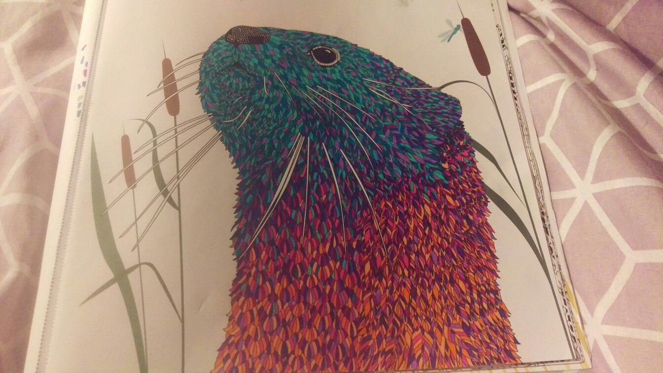 Colourful Otter from Menagerie Colouring Book