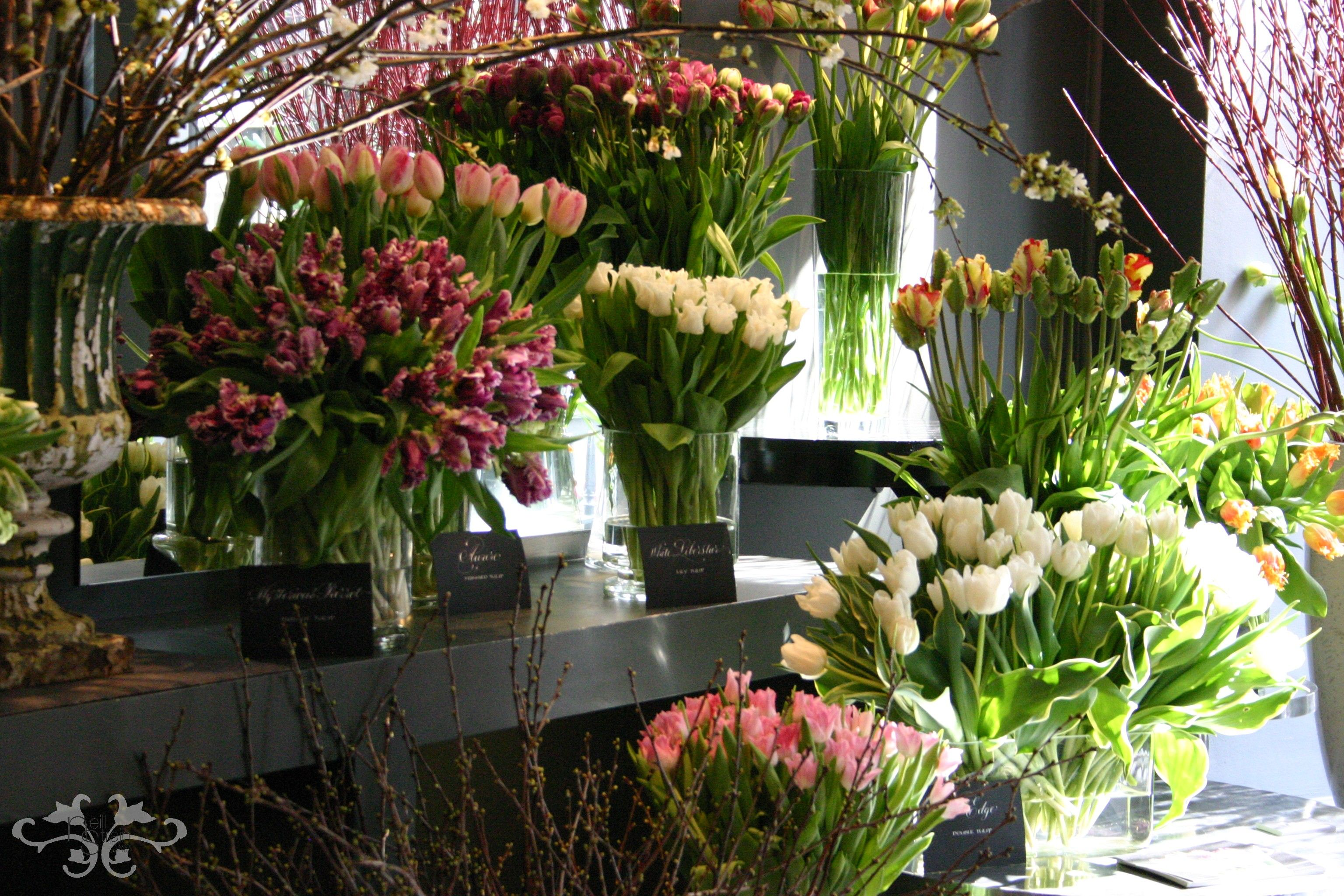 Extraordinary Selection Of Spring Flowers To Create Your Personal