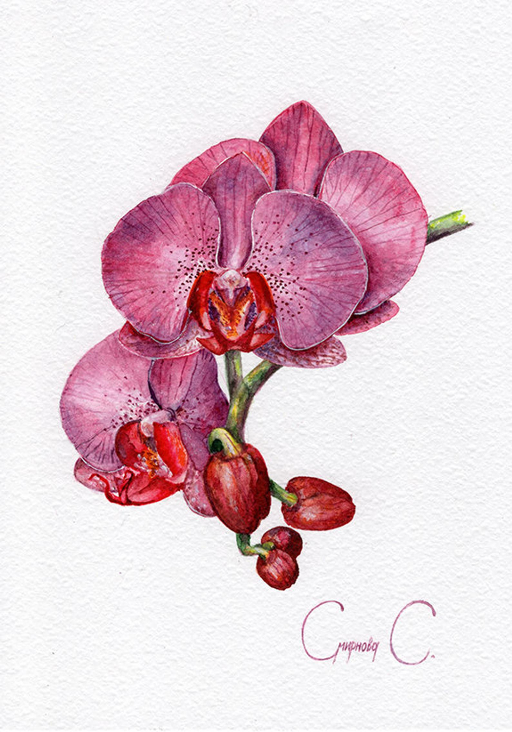 Orchid PRINT Flowers Green,Print of Original Watercolor Painting Purple Pink