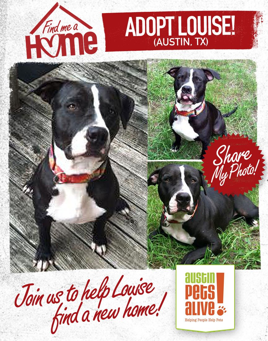Louise is in Austin at Austin Pets Alive! Contact us for