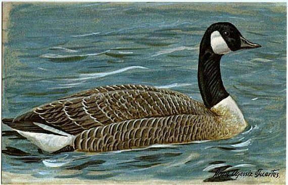 canada goose outlet orlando florida