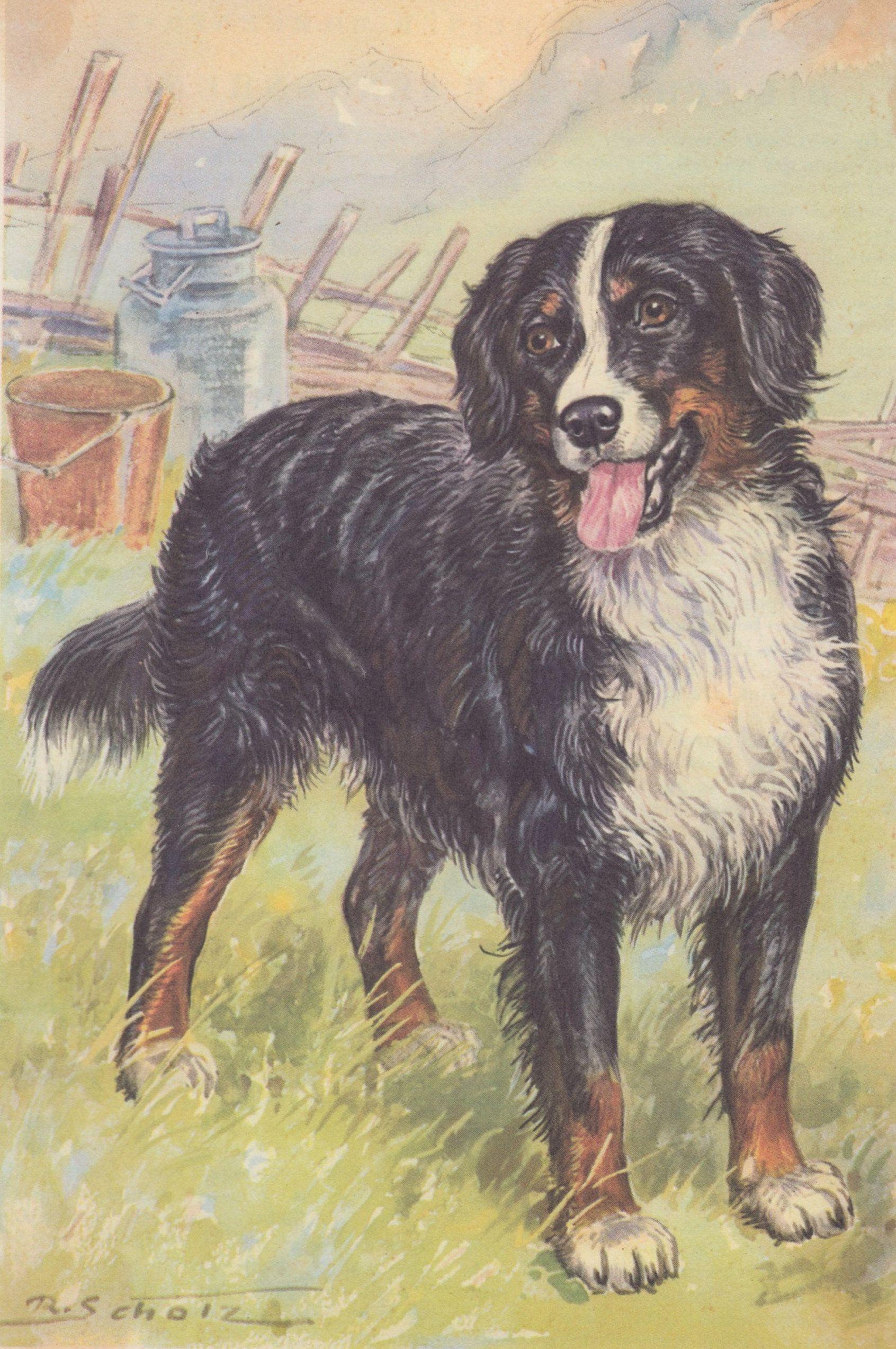 Bernese Mountain Dog Art Print Signed by Artist Ron Krajewski 8x10