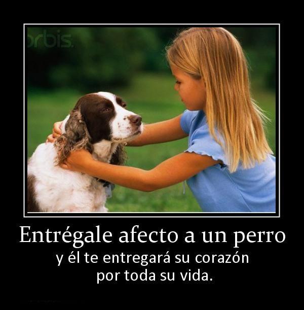 Imagenes Con Frases Sobre Entregarle Amor A Un Perro Angel