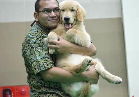 The Golden Retriever Belongs To One Of Gr Lover At Jakarta