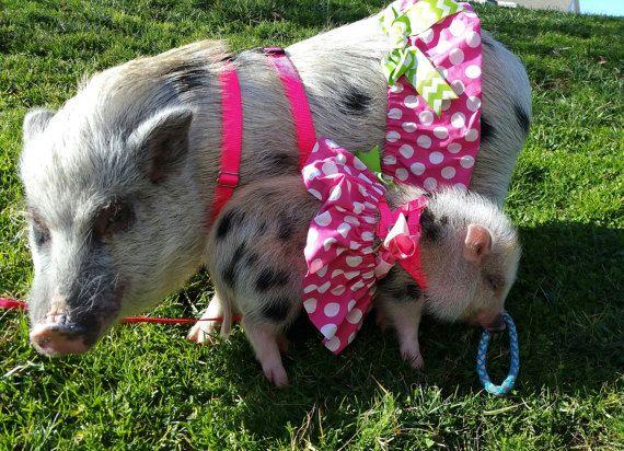 d04106f173fa7 Pretty in pink! Pet Tutu | Products | Pretty in pink, Pink, Mini pigs